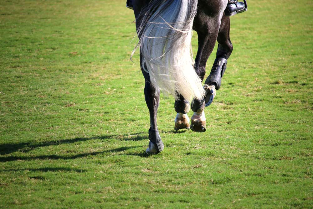 Blades of Glory: The Green & Springy Grass Fields of Blenheim EquiSports