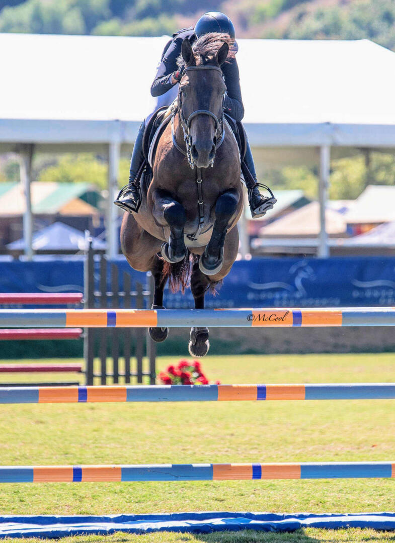 7 year old horse jumping